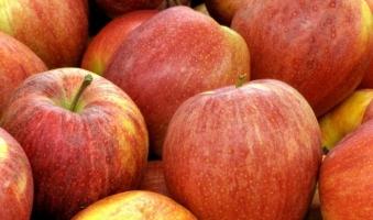 Azienda agricola Rusciano – Mele Fuji II  1 Kg
