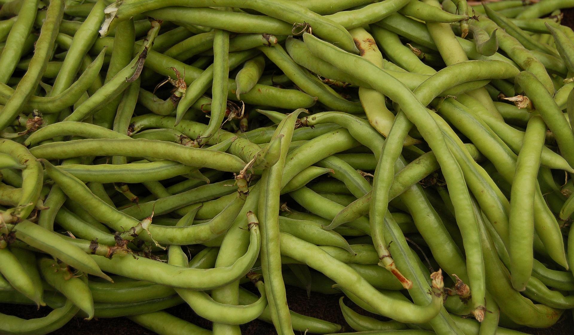 Azienda agricola Rusciano – Fave 1 Kg