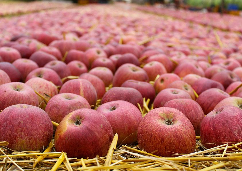 Azienda agricola Rusciano – Mela annurca I 1 kg